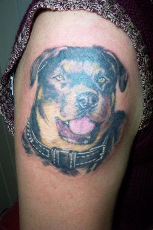 Tatouage chien rottweiler